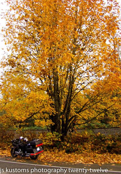 11-4-2012 fall colours